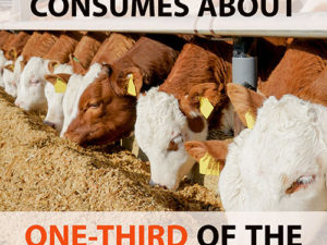Producing animal feed consumes about one-third of the planet's total arable land | Meat Your Future