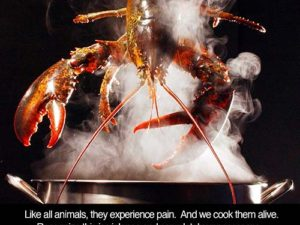 Cooking Lobsters | Meat Your Future