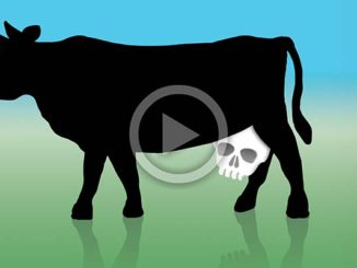 Dairy and Bones | Meat Your Future