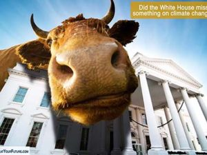 Did the White House ignore animal agriculture's impact on climate change? | Meat Your Future