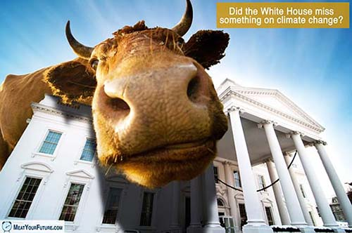 Did the White House ignore animal agriculture's impact on climate change?   Meat Your Future