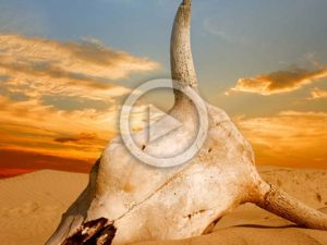 Livestock and The Sixth Mass Extinction | Meat Your Future