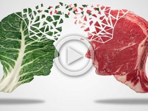 Omnivores, Herbivore or Carnivores? | Meat Your Future