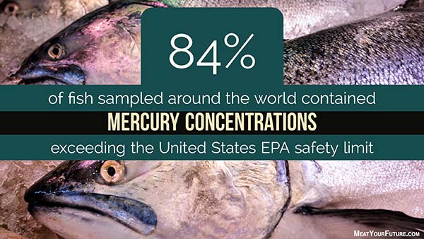 84% of fish sampled around the world have high concentrations of mercury | Meat Your Future