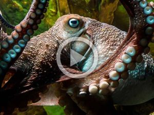 Inky The Octopus | Meat Your Future
