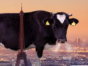 The Paris COP21 conference failed to address the enormous conitrbution that the livestock sector has dirving climate change| Meat Your Future