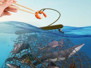 The Real Cost of Seafood | Meat Your Future