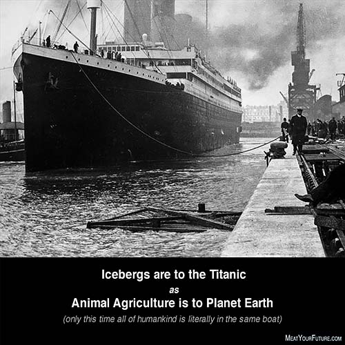 The Titanic and Animal Agriculture | Meat Your Future