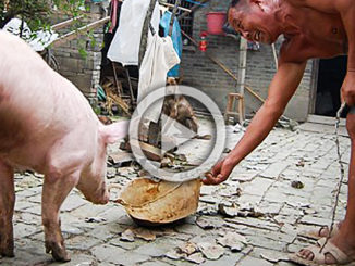 Two Legged Piget | Meat Your Future