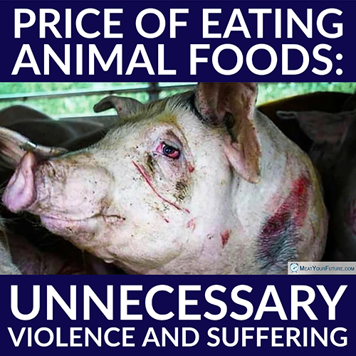 Price of Eating Animal Foods | Meat Your Future