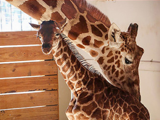 Other Animals are Equallly Important as April the Giraffe | Meat Your Future
