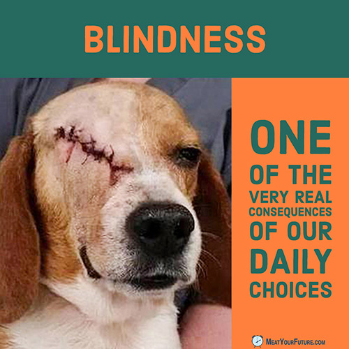 Blindness: One of the Very Real Consequences of our Daily Choices | Meat Your Future