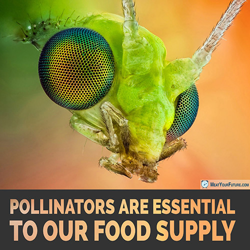 Pollinators are Essential to our Food Supply | Meat Your Future
