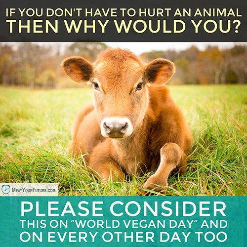 World Vegan Day 2017   Meat Your Future