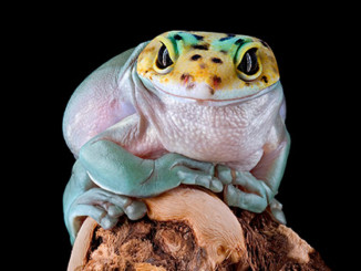 Amphibians Survived The Last Mass Extinction, But Will They Survive Humans? | Meat Your Future