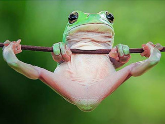 Who Cares if Frogs Go Extinct? | Meat Your Future