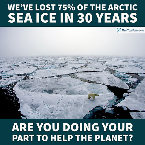 75% Arctic Ice Loss | Meat Your Future