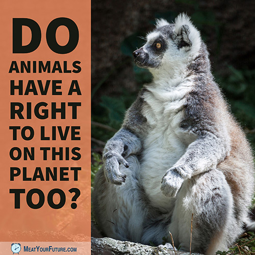 Lemur - Do Animals Have a Right to Live on This Planet Too? | Meat Your Future