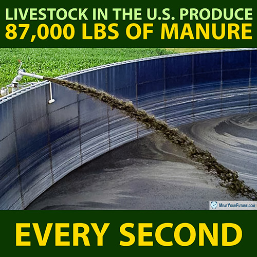 Livestock in the US Produce 87,000 lbs of Manure Every Second | Meat Your Future