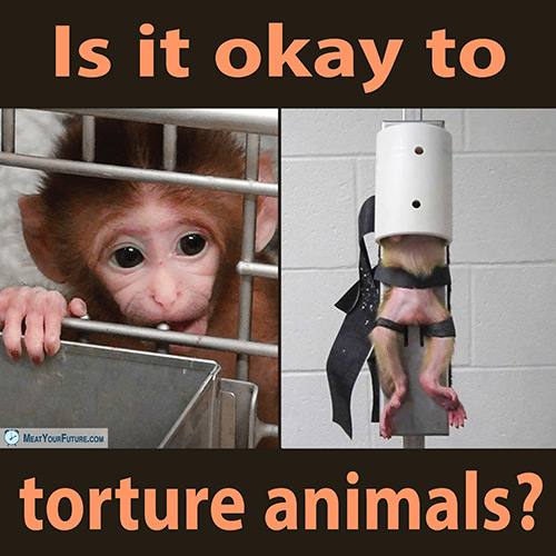 Is It Okay To Torture Animals? | Meat Your Future