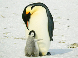 Penguins Facing Extinction - Livestock to Blame | Meat Your Future