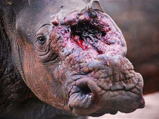 Vince the Rhino Poached in a Zoo | Meat Your Future