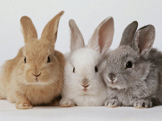 """The """"Rabbit Plan"""" 