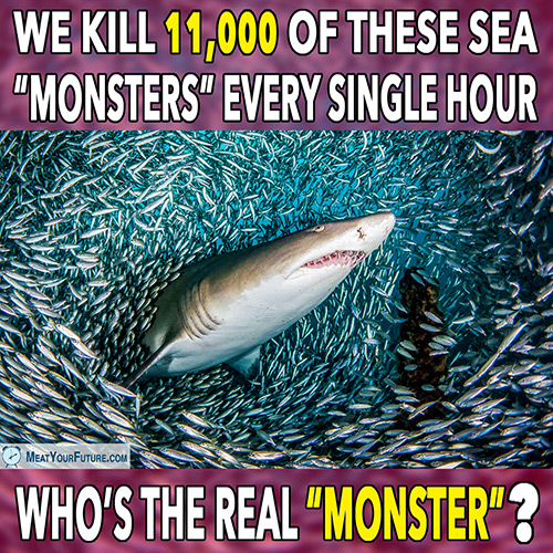 "We Kill 11,000 of These Sea ""Monsters"" Every Hour - Who's the Real ""Monster""? 