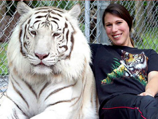 More Tigers in American Backyards than in the Wild | Meat Your Future