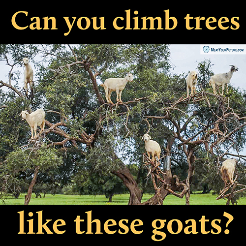 Can You Climb Trees Like These Goats? | Meat Your Future