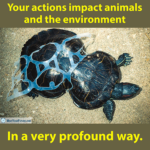 Your Actions Impact Animals and the Environment | Meat Your Future