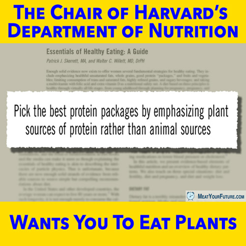 Harvard Wants You To Eat Plants | Meat Your Future