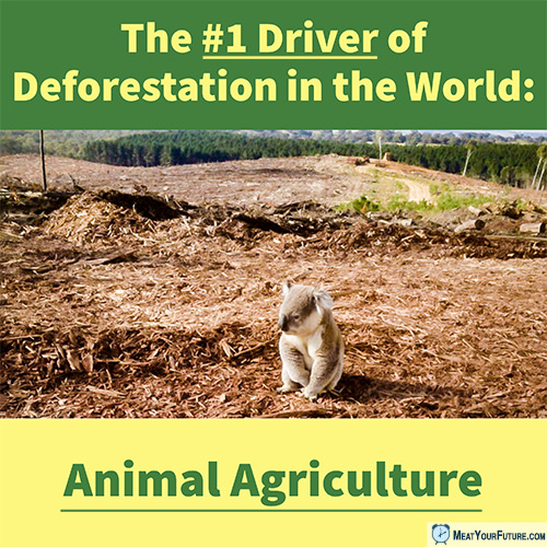 #1 Driver of Deforestation: Animal Agriculture | Meat Your Future