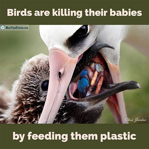 Birds Are Killing Their Babies With Plastic | Meat Your Future