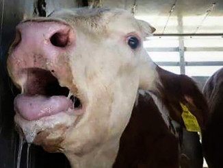 Is Torturing Animals Our Right? | Meat Your Future