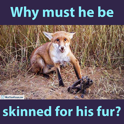 Why Must He Be Skinned For His Fur? | Meat Your Future