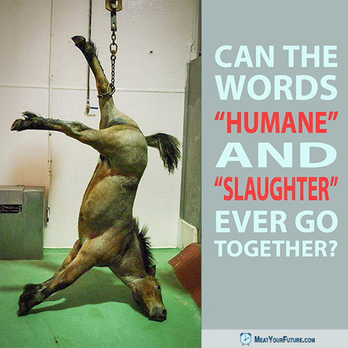 "Can the Words ""Humane"" and ""Slaughter"" Ever Go Together? 