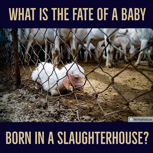 What is the fate of a baby born in a slaughterhouse? | Meat Your Future