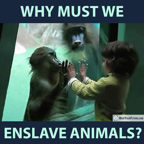 Why Must We Enslave Animals? | Meat Your Future