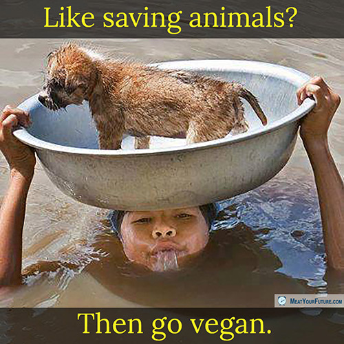 Like Saving Animals? Then Go Vegan | Meat Your Future