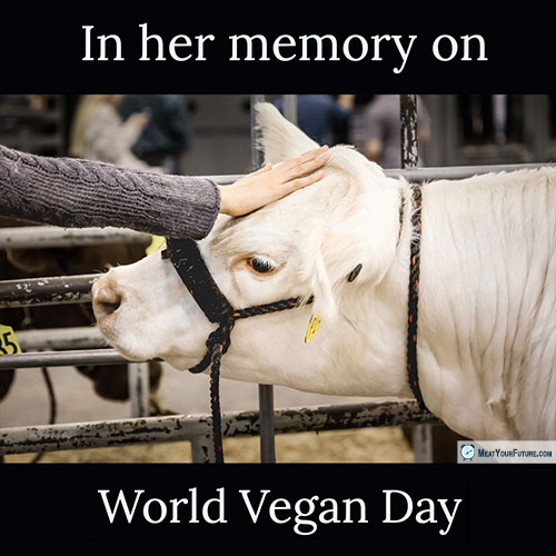 In Her Memory on World Vegan Day | Meat Your Future