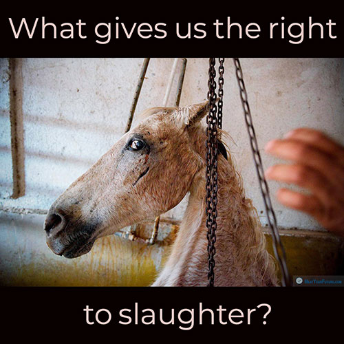 What Gives Us The Right to Slaughter? | Meat Your Future