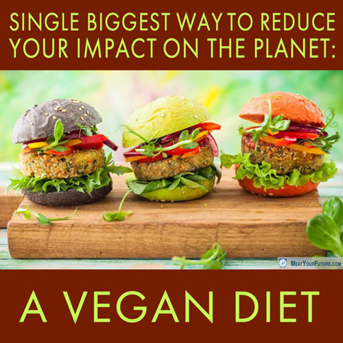 Single Biggest Way to Reduce Your Impact on the Planet: A Vegan Diet | Meat Your Future