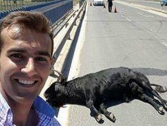 Selfie With A Dying Bull. Must We Be So Callous? | Meat Your Future