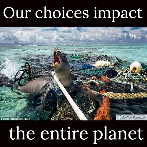 Our Choices Impact The Entire Planet | Meat Your Future