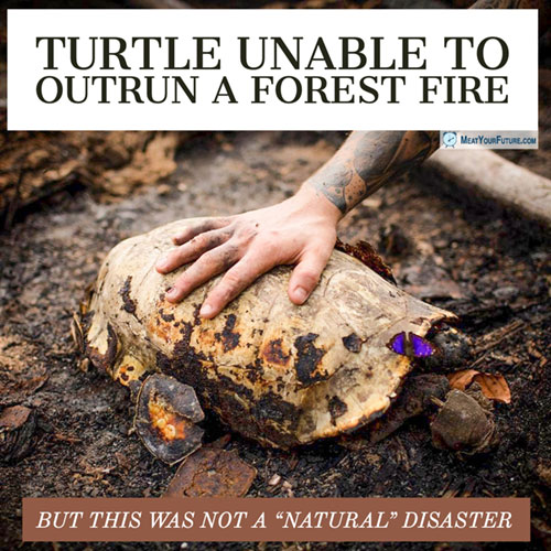 Turtle Unable to Outrun a Forest Fire | Meat Your Future