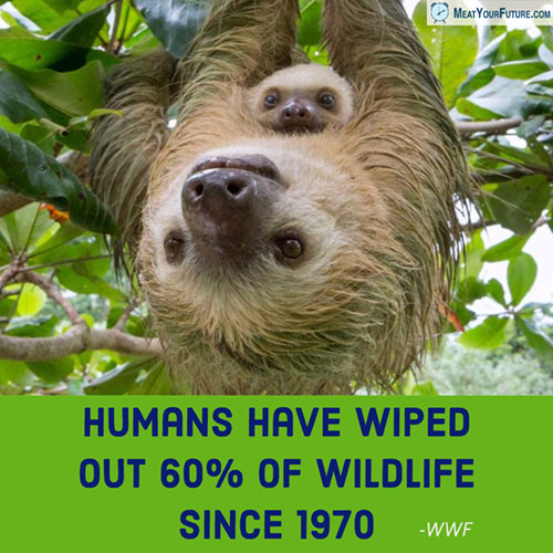 Humans Have Wiped-Out 60% of Wildlife Since 1970 | Meat Your Future