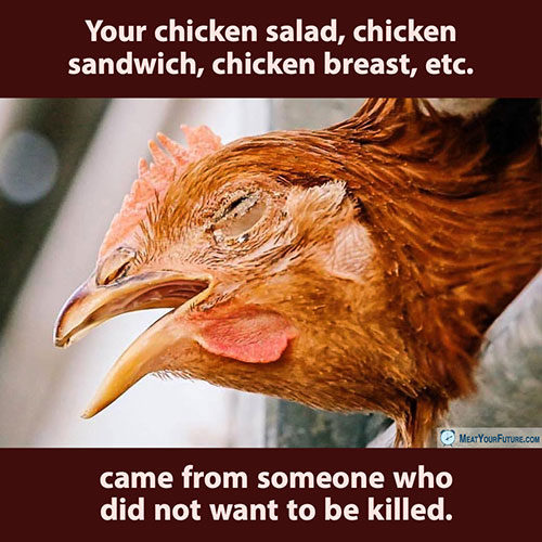 Your Chicken Salad Came From Someone Who Did Not Want to Be Killed | Meat Your Future