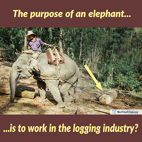 The Purpose of an Elephant is to Work in the Logging Industry? | Meat Your Future
