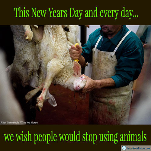 New Years Day Wish: Stop Using Animals | Meat Your Future